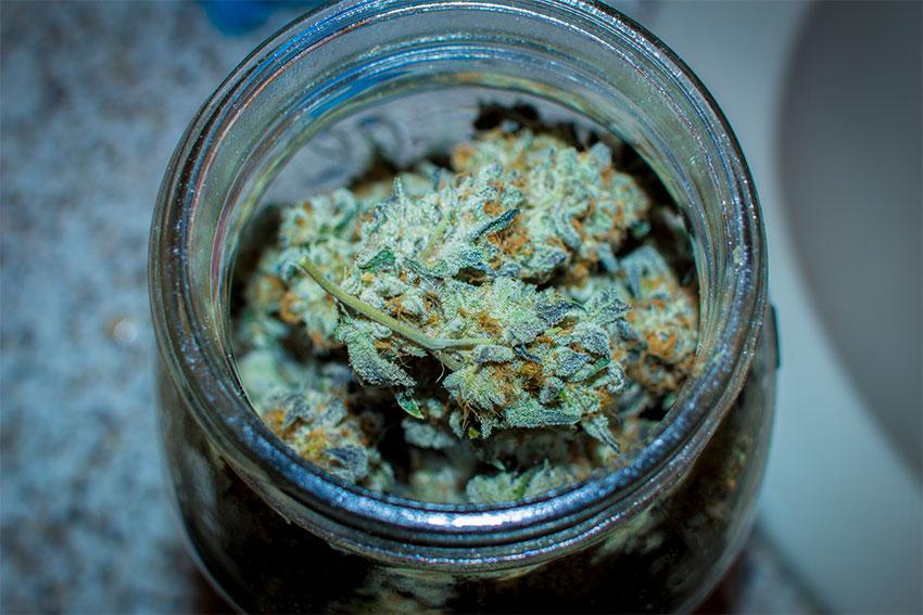 Cannabis-Trocknen