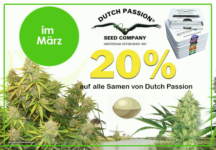 Im März gibt es 20% auf alle Samen von Dutch Passion, feminisiert, regular, automatic Seeds