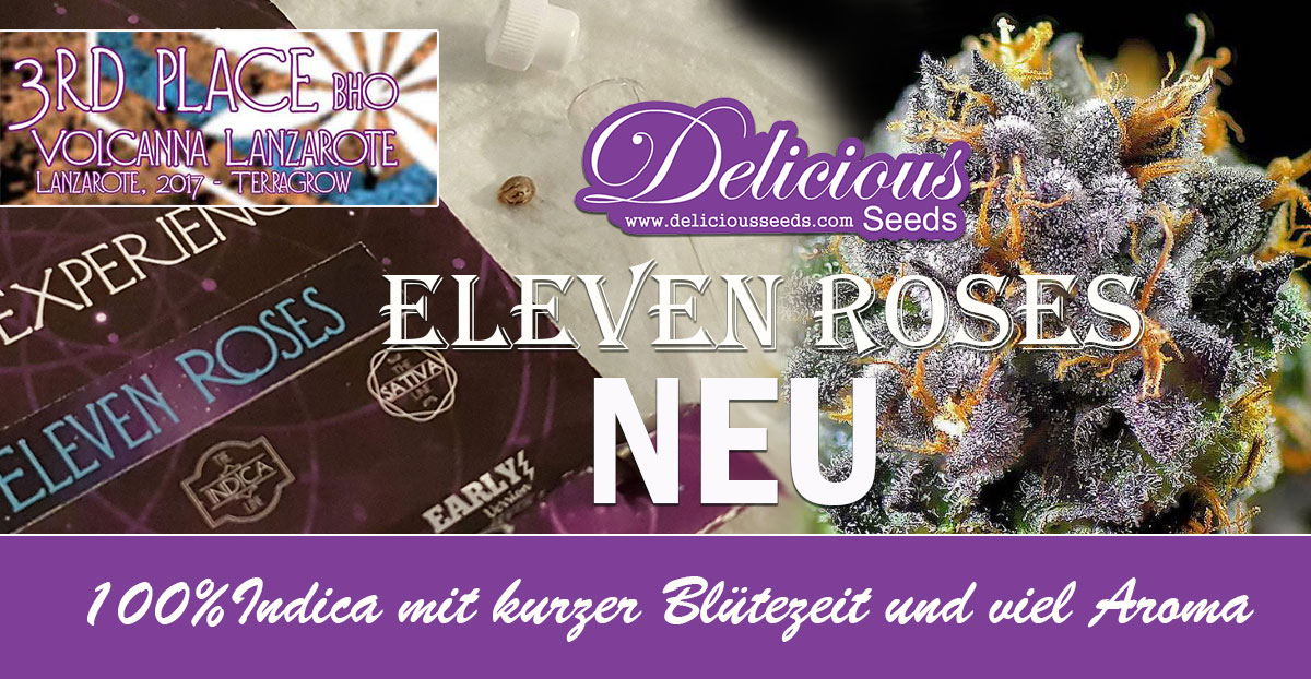 Eleven Roses Delcious Seeds