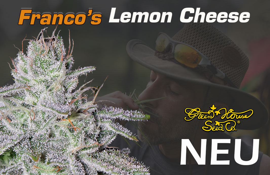 Francos-Lemon-Cheese-Neu