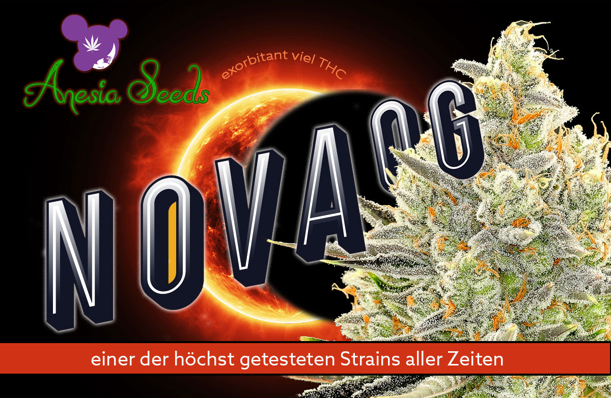 Nova-Og-neuer-Strain-Anesia