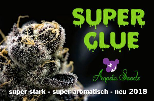 super-Glue-Anesia-Seeds-2018