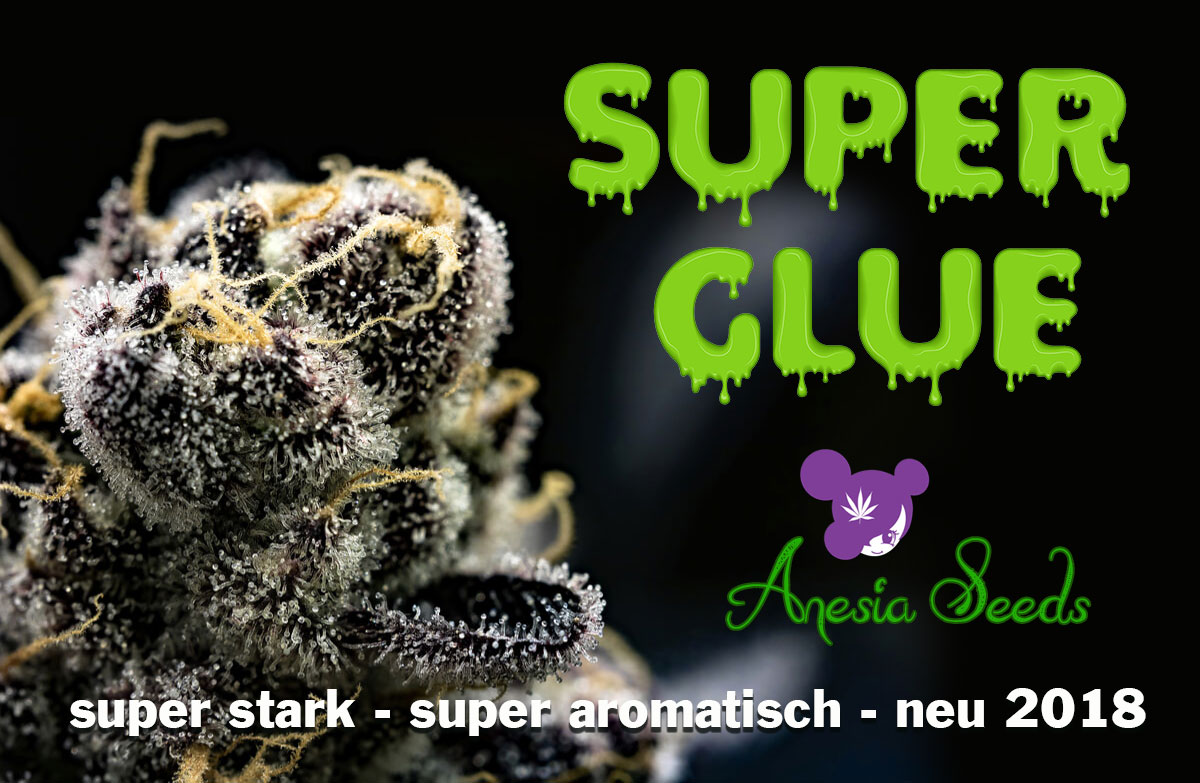 super-Glue-Anesia-Seeds-2018