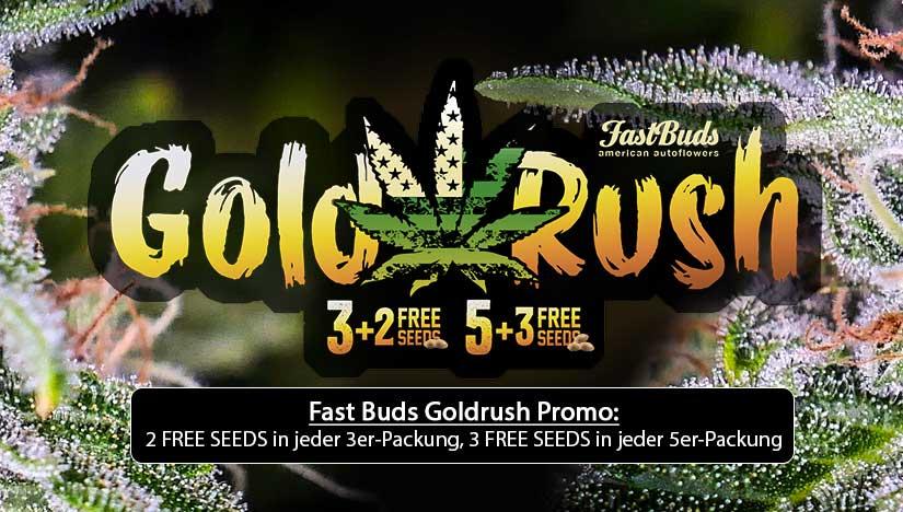 Fast-Buds-Goldrush-Promo