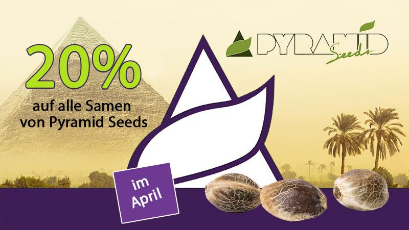 Den ganzen April gibt es 20% auf alle Cannabissamen von Pyramid Seeds, automatics, feminisiert, CBD