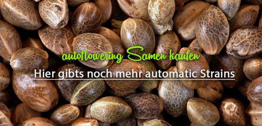 automatic-Samen-kaufen