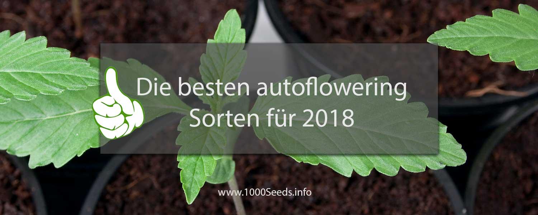 die-besten-autoflowering-Sorten-2018