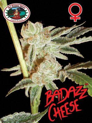 Badazz-Cheese-Big-Buddha