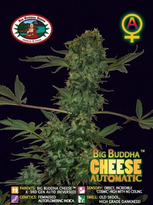 Big-Buddha-Cheese-auto