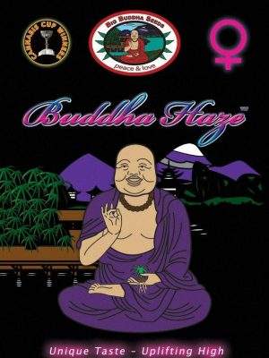 Big Buddha Haze