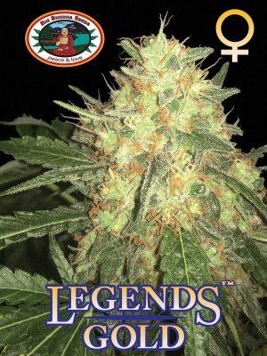 Legends-Gold