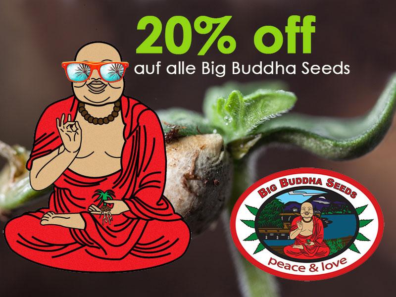 20 Prozent auf Big Buddha Cannabis Seeds