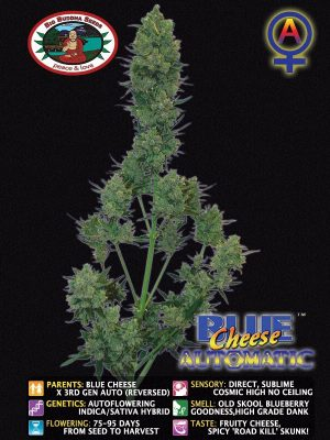 blue-Cheeese-Auto