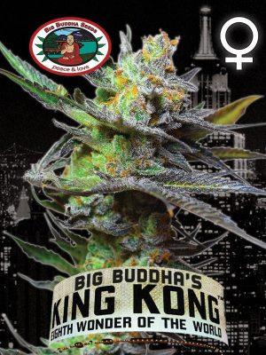 King-Kong-Big-Buddha