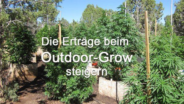 Ertrag steigern Outdoor Grow