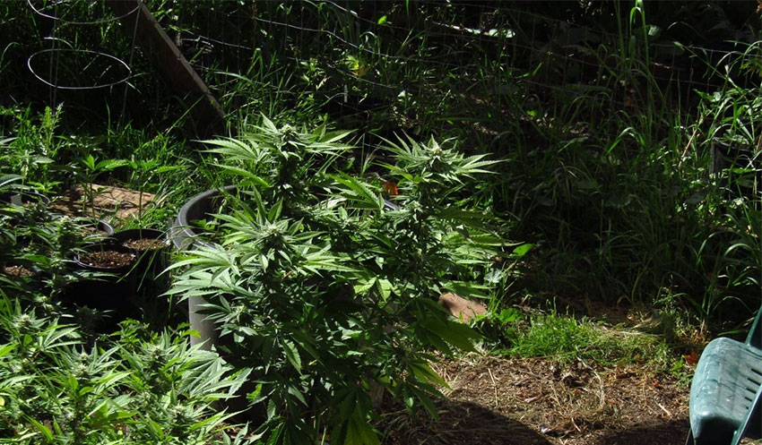 Grow-Outdoor-Tipps