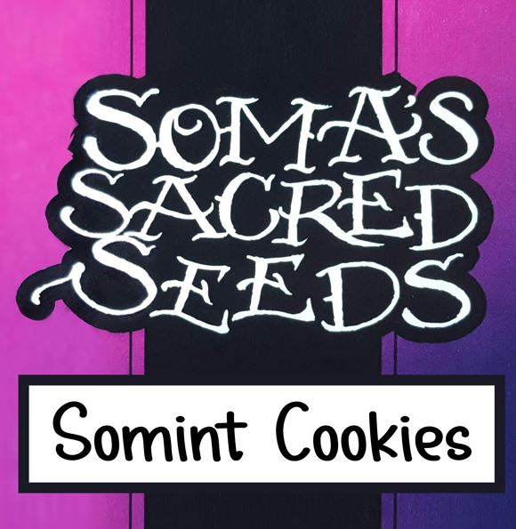Somint Cookies von Soma Seeds