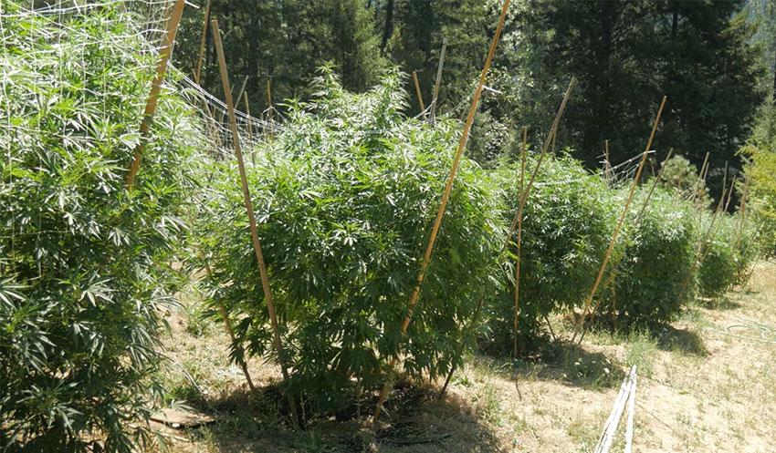 outdoorpflanzen beschneiden