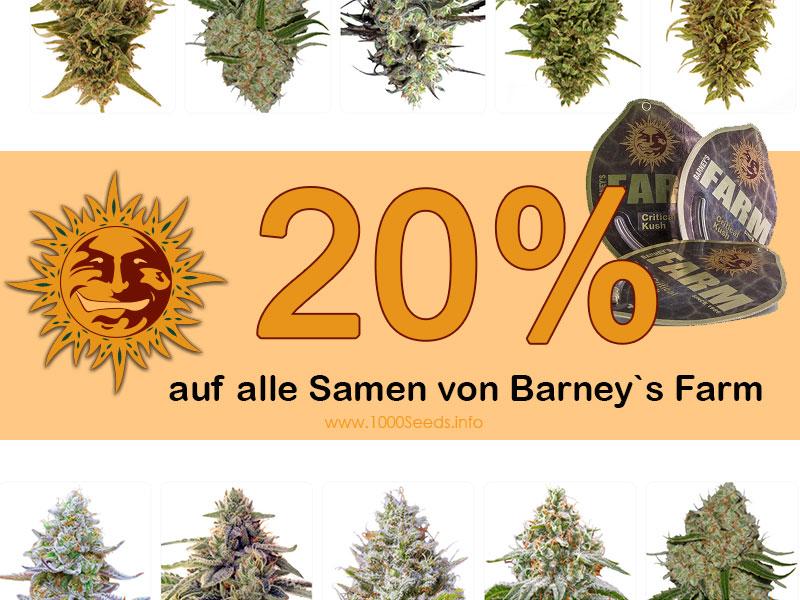 Den ganzen August gibt es bei 1000Seeds 20 Prozent auf alle Cannabissamen von Barneys Farm