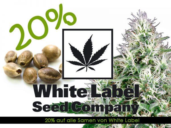 Den ganzen September gibt es 20 Prozent auf alle Cannabissamen von White Label
