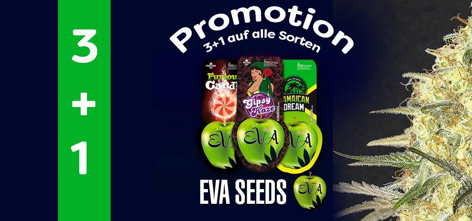 Eva-Seeds-promotion