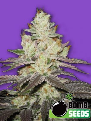 Killer Purps von Bomb Seeds