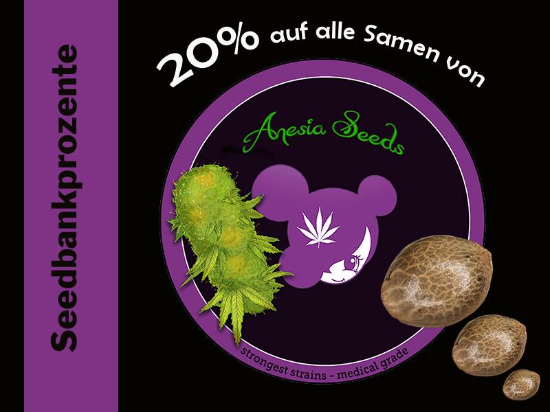 Im Oktober erhältst Du 20% auf alle Cannabissamen von Anesia Seeds, Big Bazooka, Gorilla Glue, Bruce Banner
