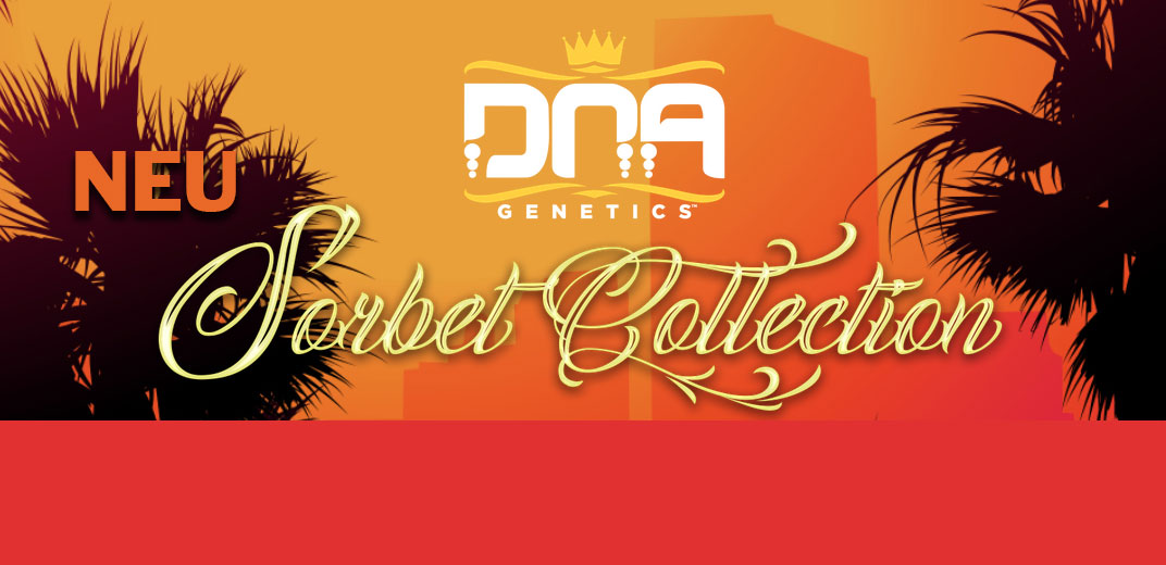 Sorbet-Collection-DNA