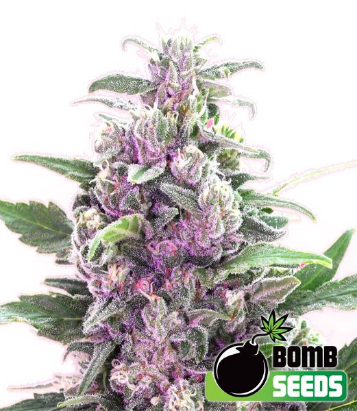 THC-bomb