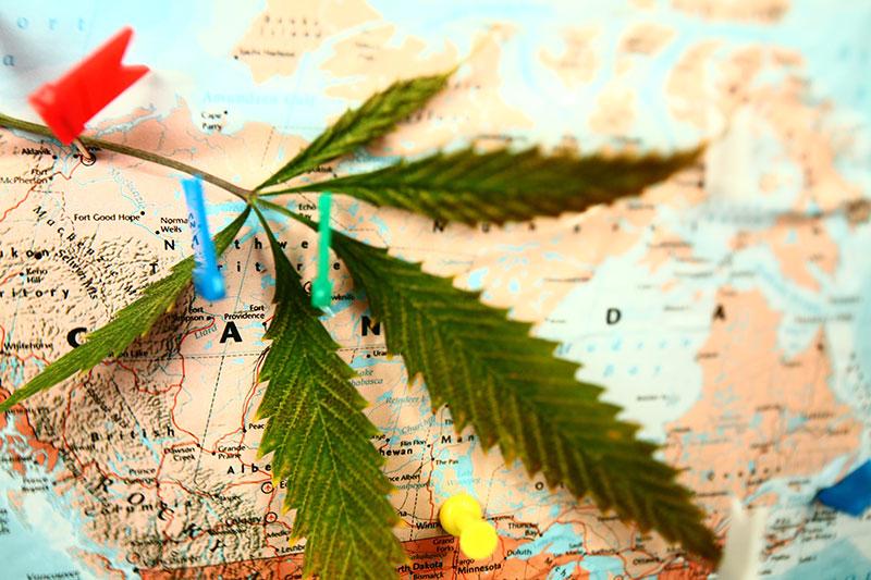 Cannabisforschung Länder