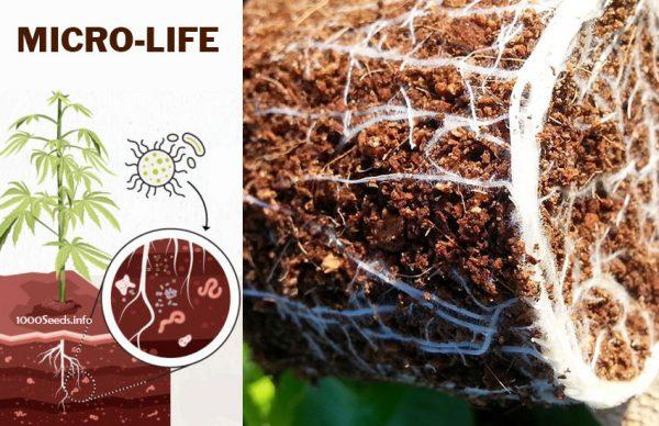 Mikroorganismen im Boden