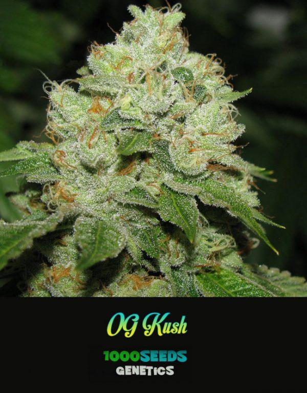OG-KUSH-Free-Seeds