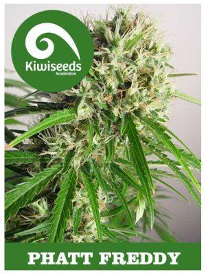 Phatt Freddy von Kiwi Seeds