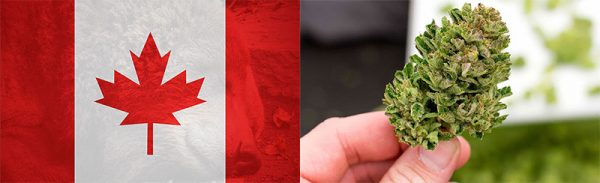 medical-Marijuana-Kanada