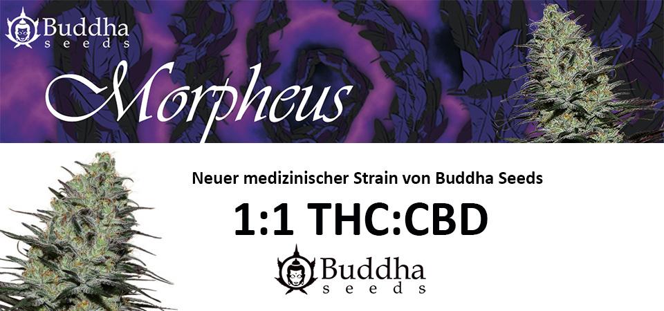 morpheus-Buddha-Seeds
