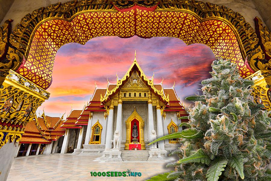 Cannabislegalisierung-thailand