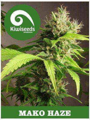 Mako Haze von Kiwi Seeds