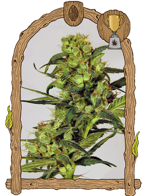 Spicy-Bitch-Exotic-Seeds