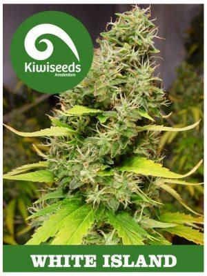 White Island von Kiwi Seeds