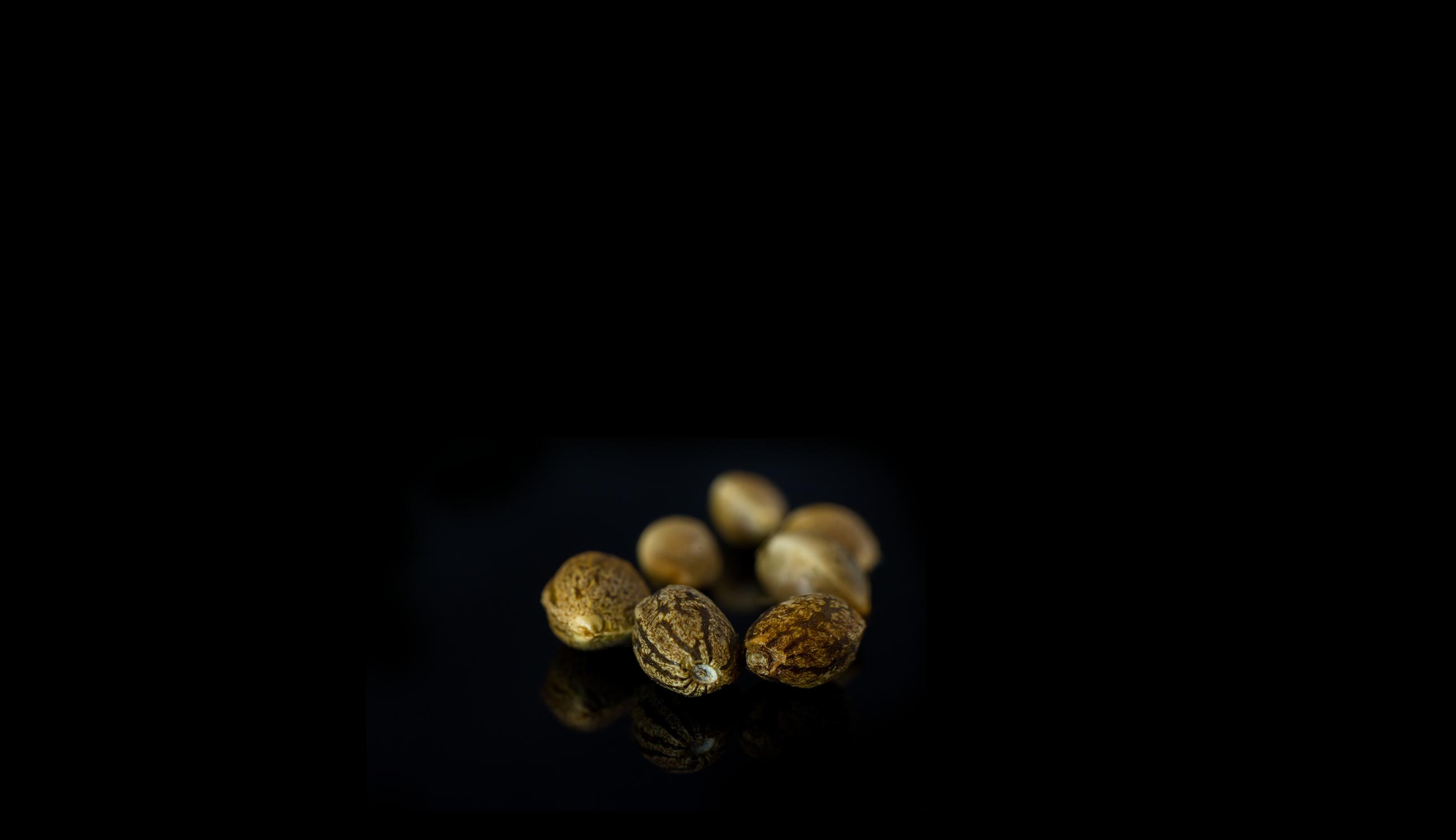 Cannabissamen-kaufen-Seedshop-Growshop