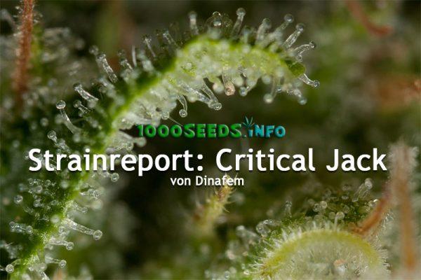 Strainreport-Critical-Jack