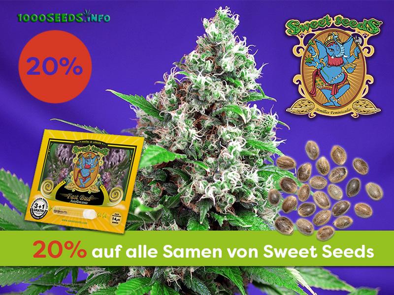 Den kompletten Januar gibt es bei uns 20% Rabatt auf alle Cannabissamen von Sweet Seeds