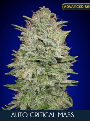 Auto Critical Mass von Advanced Seeds