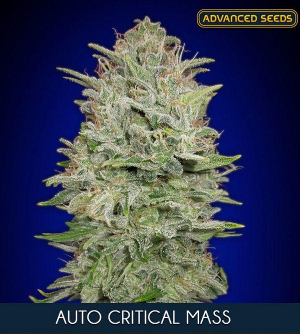 Auto Critical Mass von Advanced Seeds