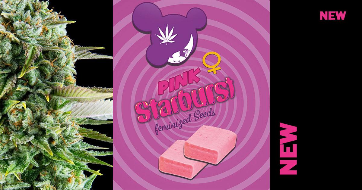 Pink-Starburst-neu-Anesia2019