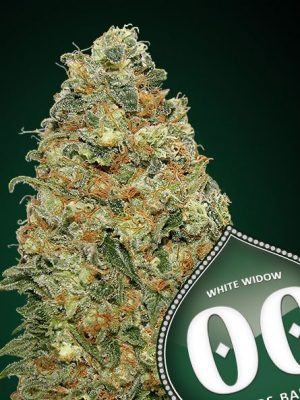 White Widow von 00 Seeds