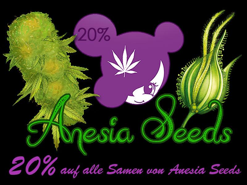 m März gibt es 20% auf alle Cannabissamen von Anesia Seeds, automatic seeds, feminisierte Samen