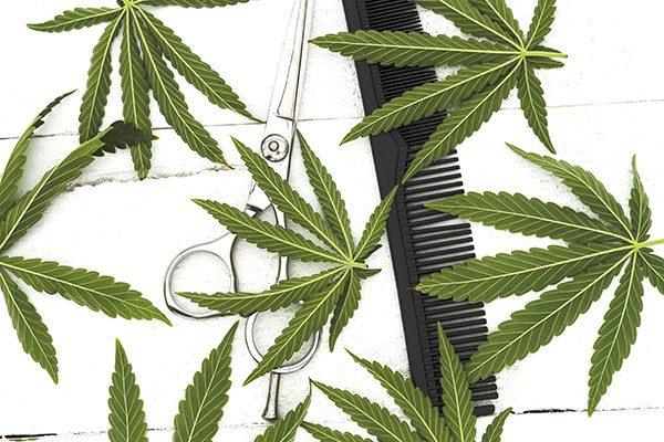 Cannabispflanzen-beschneiden