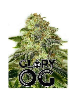 Glory-OG-Positronics