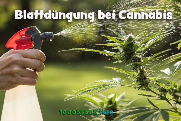 Cannabis-Spray